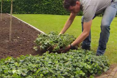 Maanpeittokasvit