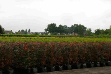 Astioissa kasvatetut pensasaitaelementit (koko 175x100x40 cm asti)