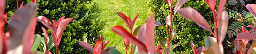 Ainavihannat pensasaidat puutarhassa