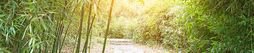 Bambu aitakasvina
