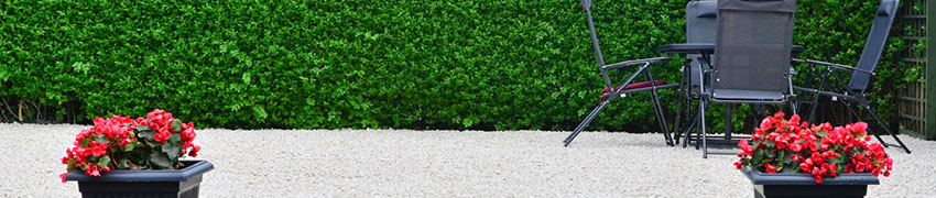 Likusteri puutarhassa